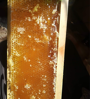 Honey + Hive Products